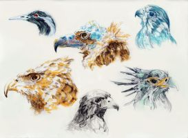 Study on Birds by Ashvin-3