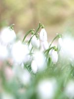 Through the Softness by Tricia-Danby