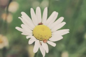 Flower (With bug friends) :3 by apparate