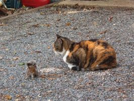 Mama Kitty, Baby Squirel by purewhiteshadow