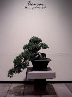 Bonsai by UnhingedMouse0