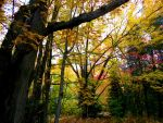 Enchanted Forest aka scout camp by AG88