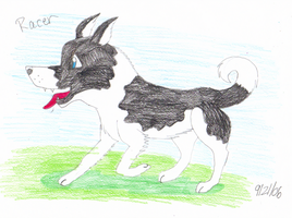 Racer The Boarder Collie by TheOriginalSkunky