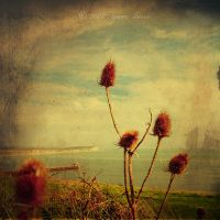 thistle in Newhaven by nnoik by Slovakia