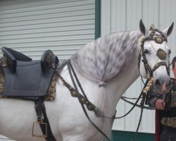 Gray Andalusian Stallion 002 by diamonte-stock