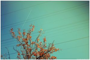 Autumn, lines and planes by xChemicalWinterx