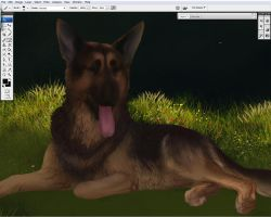 GSD pet portrait WIP by T0xicEye