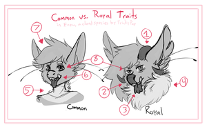 Enzu Guide - Common vs Royal by trickypup
