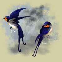 Swallows by Lenika86