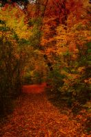 Herbst 04 by Anschi71