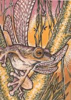 Winged Frog ACEO by Redwall151