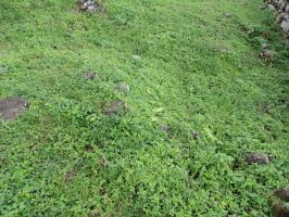 Ground Cover by frisbystock