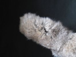 Rabbit Fur 12 by TRANS4MATICA