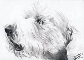 Old English Sheepdog Portrait by Janexas