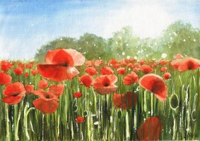Poppy field by JoaRosa