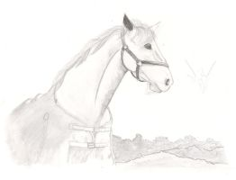 Horse by Smilened