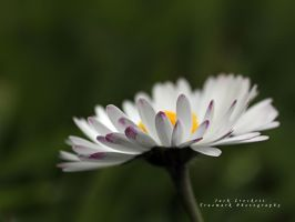 Daisy Dancer by andras120