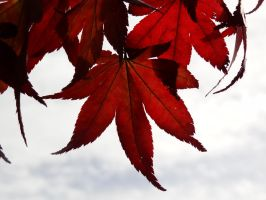 Autumn Leaves 4 -untouched- by IoannisCleary