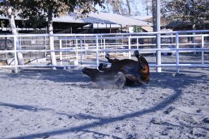 bay horse stock 23 by xbr0kendevotion