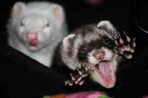 Monster ferret by LarissaAllen