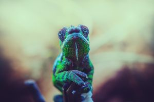 Chameleon by CliffWFotografie