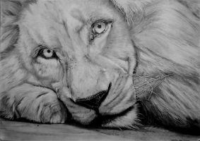 White Lion by DamianK-Art