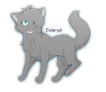 Cinderpelt by BrooklynKillsDreams