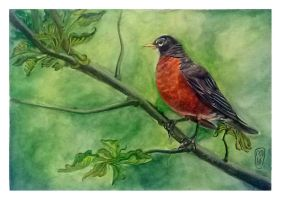 Watercolour. The bird on the branch. by milesboard