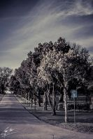 Memory Lane - Suspenceful Ave by SevenPhotoDFW