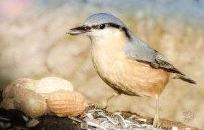 Happy Nuthatch by XanaduPhotography