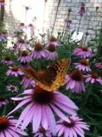 Butterfly Rested on Flower by leighbennett