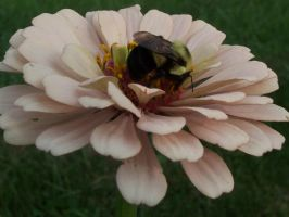 Bee on a Flower by jstan714