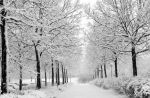 Winter by marquis73