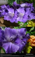 Purple Gladiolas Stock 1 by Melyssah6-Stock