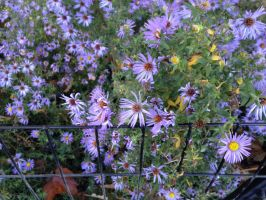 Flowers and Fence in Central Park by Mirandas-Drawings