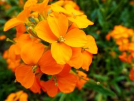 Orange Cluster by MissObsidian95