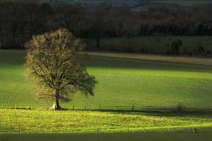 Arbre3 by hubert61