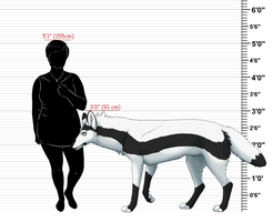 Size Chart by VexiWolf