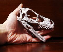 raptor skull and my hand by hannay1982