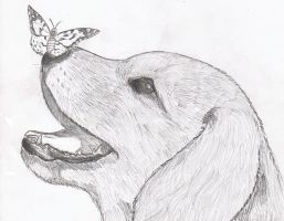 The puppy and the butterfly by Anna-XIII