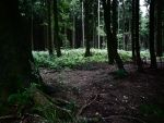 Dark Forest 1 by Dragoroth-stock