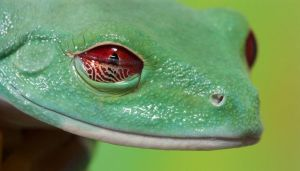 Frog eye membrane by AngiWallace