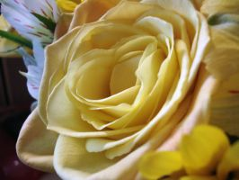 yellow rose by pungen