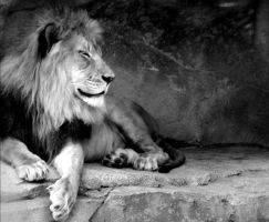The black and white lion by Forever-Midnight