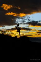 Joshua Tree Sunset by Mac-Wiz
