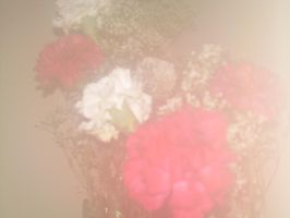 Fogged Carnations by fairybeliever87