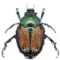 Japanese Beetle Bedazzled, Transparent background by feralcoot