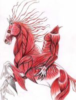 Nuckelavee by verreaux