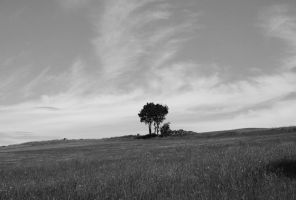 Lonely Trees by kErstinR