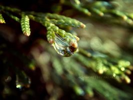 Spring to Life by iAmoret